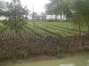 21 08 Jardin potager .JPG